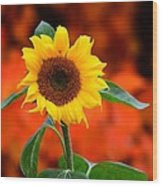 Last Sunflower Horizontal Wood Print