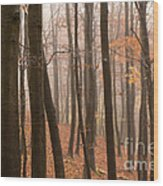 Late Autumn Beech Wood Print