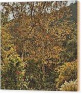 Late Autumn Walk Wood Print