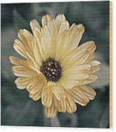 Late Bloomer Wood Print