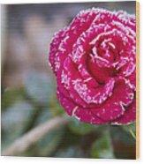 Late Blossom Wood Print