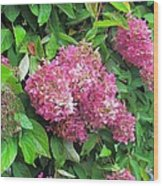 Late Hydrangea Flower Wood Print