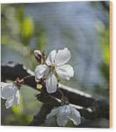 Late Spring Blossom Wood Print