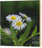 Late Summer Bloom Wood Print