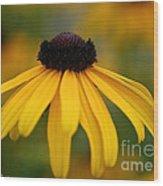 Late Summer Blooms Wood Print