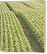Late Summer Corn Field In Maine Wood Print