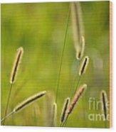 Late Summer Grasses Wood Print