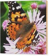 Late Summer Painted Lady Wood Print