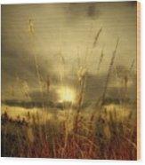 Late Summer Sun Through The High Grass Wood Print