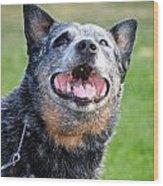 Laughing Dog Wood Print