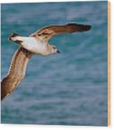 Laughing Gull 002 Wood Print
