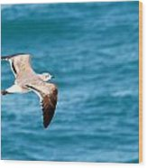 Laughing Gull 003 Wood Print