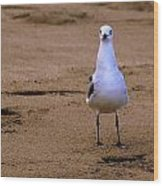 Laughing Gull 004 Wood Print