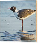 Laughing Gull On The Beach At Fort Clinch State Park Florida  Wood Print