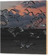 Laughing Gull Twilight Wood Print