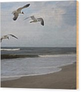 Laughing Gulls Over Nags Head Wood Print