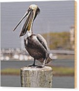 Laughing Pelican Wood Print