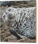 Laughing Seal Wood Print