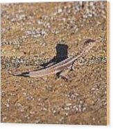 Lava Lizard Wood Print