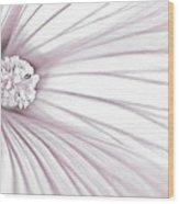 Lavatera Flower Stamen Macro  Wood Print