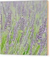 Lavender 1 Wood Print