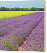 Lavender And Mustard Wood Print