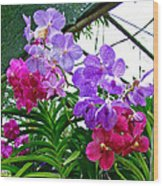 Lavender And Red Orchids At Maerim Orchid Farm In Chiang Mai-tha Wood Print