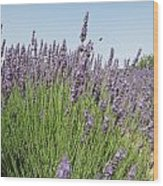 Lavender And The Bee Wood Print