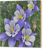 Lavender And White Star Flowers Wood Print