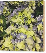 Lavender And Yellow Hydrangea Wood Print