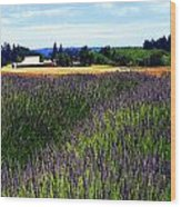 Lavender Barn Wood Print by Mamie Gunning