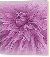 Lavender Beauty Wood Print