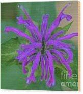 Lavender Bloom Wood Print