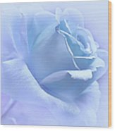 Lavender Blue Rose Flower Wood Print