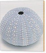 Blue Sea Urchin White Wood Print