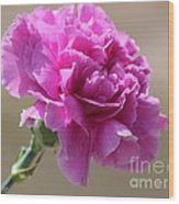 Lavender Carnation Wood Print