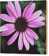 Lavender Daisy Wood Print