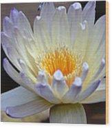 Lavender Edged Lotus Wood Print