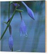 Lavender Evening Wood Print