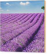 Lavender Field And Tree In Summer Provence France. Wood Print by Matteo Colombo