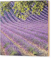 Lavender Field In France Wood Print