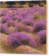 Lavender Fields 2 Wood Print