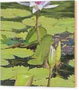 Lavender Flower On A Pond Wood Print