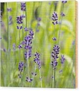 Lavender Flowers Background Wood Print