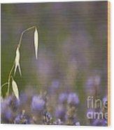 Lavender, France Wood Print