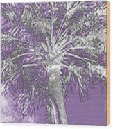 Lavender Glow Palm Tree Myakka River State Park Usa Wood Print
