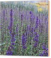 Lavender In The City Park Wood Print