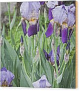Lavender Iris Group Wood Print