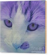 Lavender Kitten Wood Print
