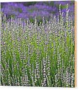 Lavender Layers Wood Print